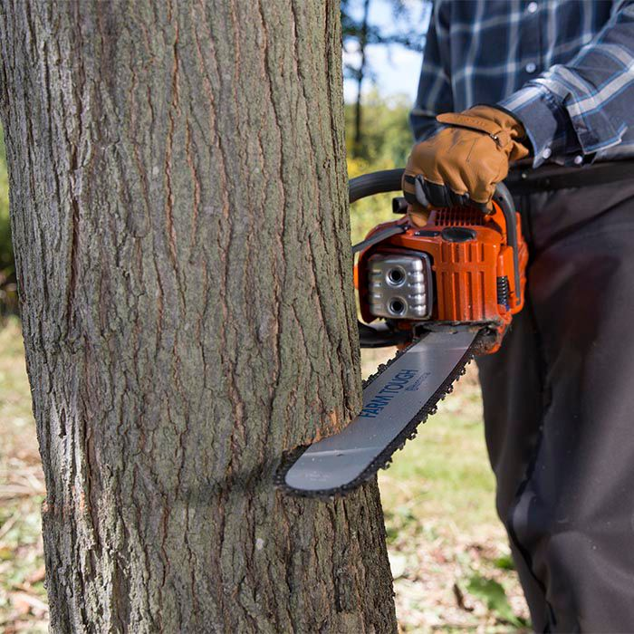 How to Cut Down a Tree Chainsaw