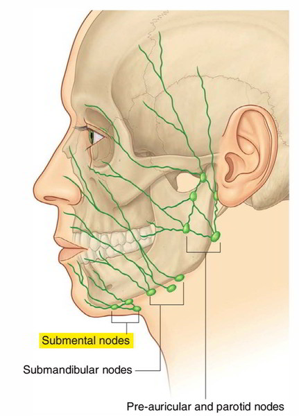 Lymph Nodes in Jaw