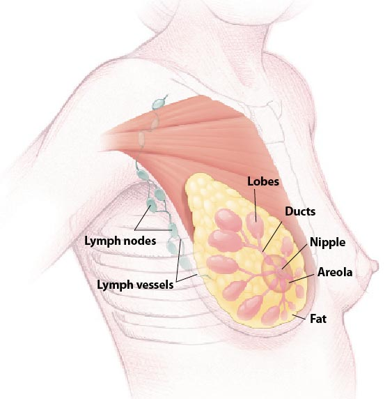 Breast Lymph Nodes Swollen