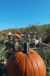 Echo Hill Orchards and Winery in Monson, MA