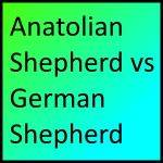 Anatolian Shepherd vs German Shepherd