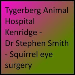 Tygerberg Animal Hospital Kenridge - Dr Stephen Smith - Squirrel eye surgery