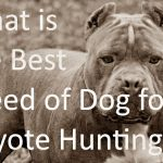 What is the Best Breed of Dog for Coyote Hunting
